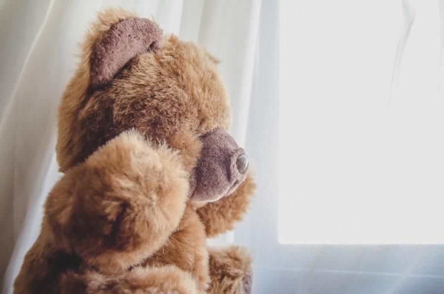 teddy bear looking out window